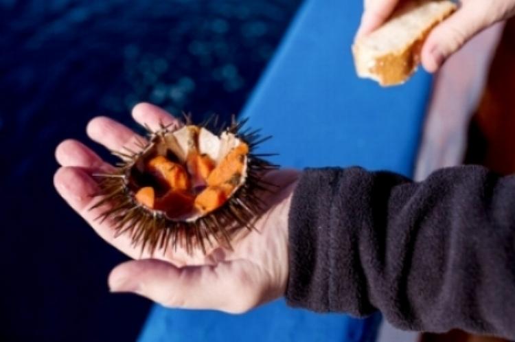 Sea Urchins.jpg