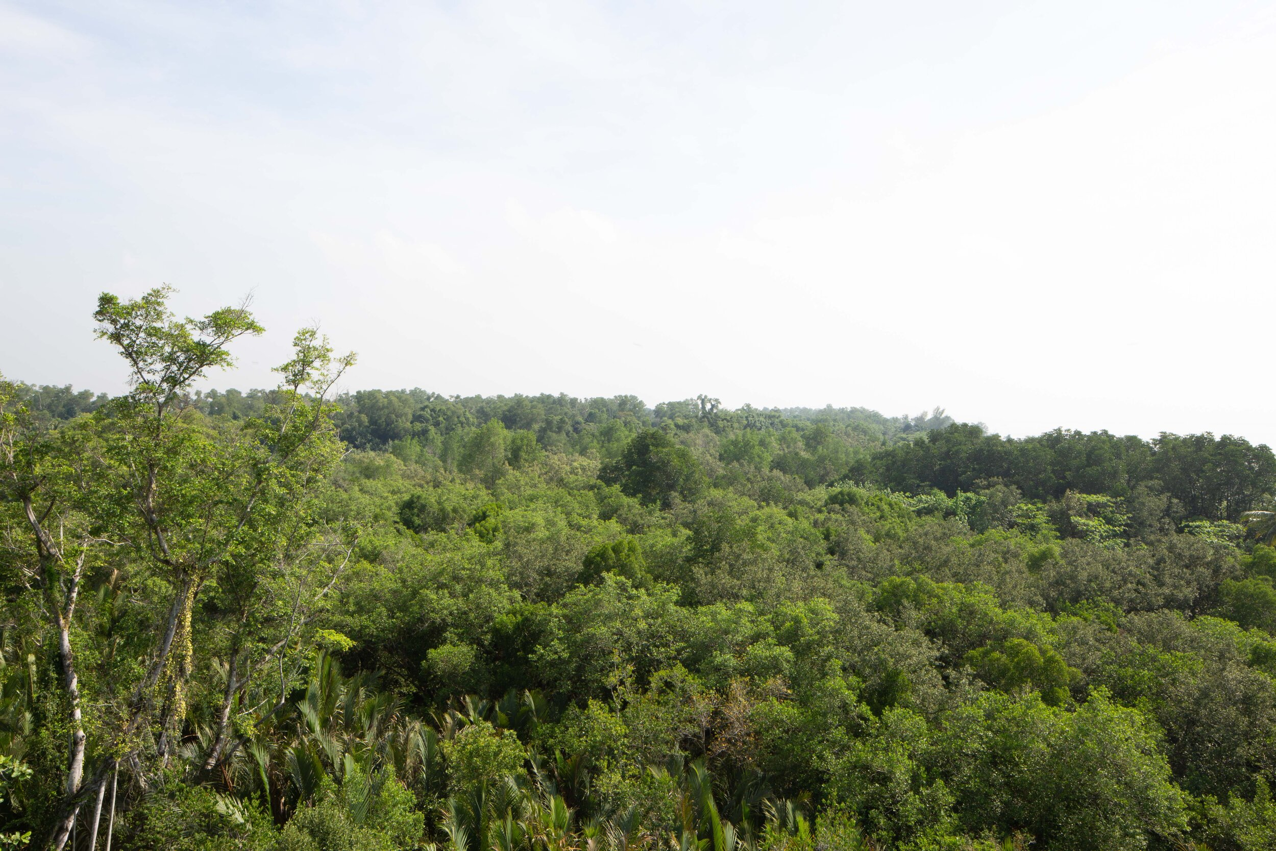 Overlooking the tropical forest from the seven-story tall Jejawi Tower viewing point