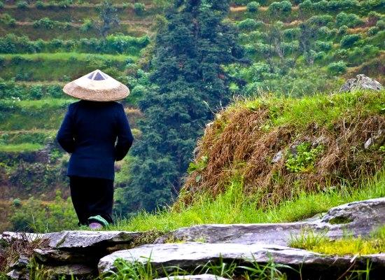 Rice-fieldsa.jpg