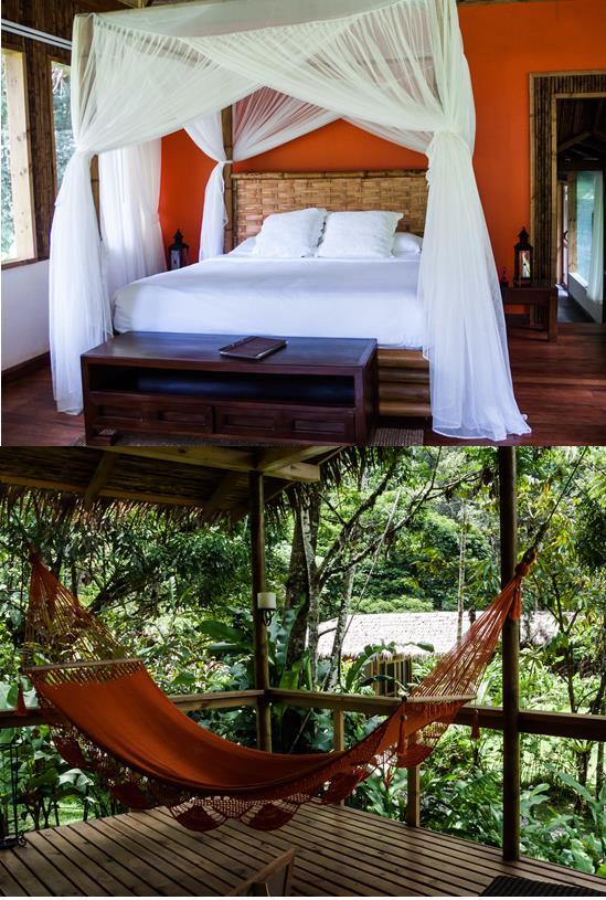 Jungle-lodge.jpg