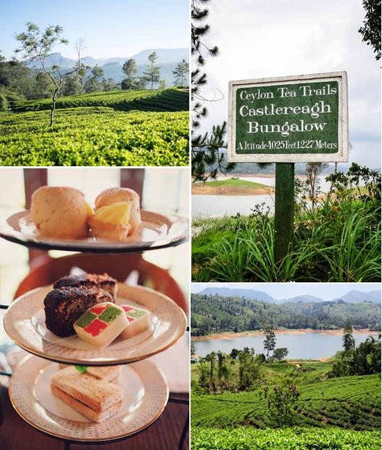 Tea-Trails1.jpg