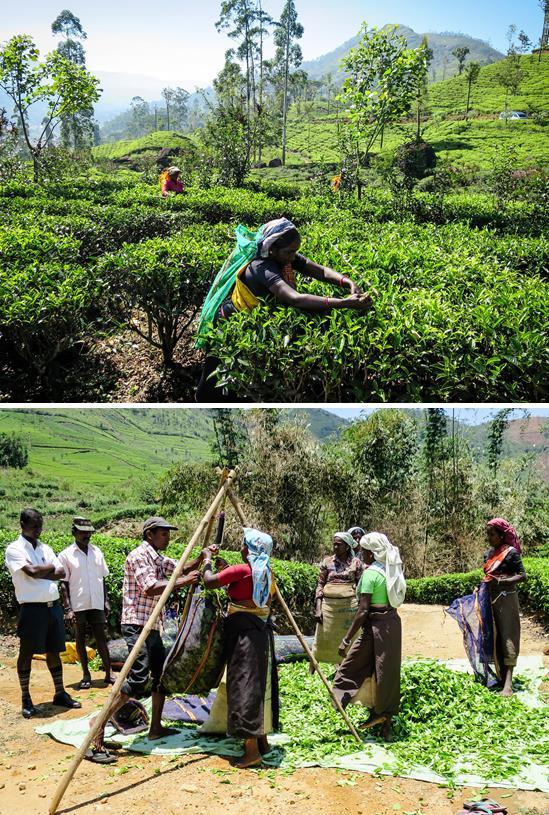 Tea-Trails2.jpg