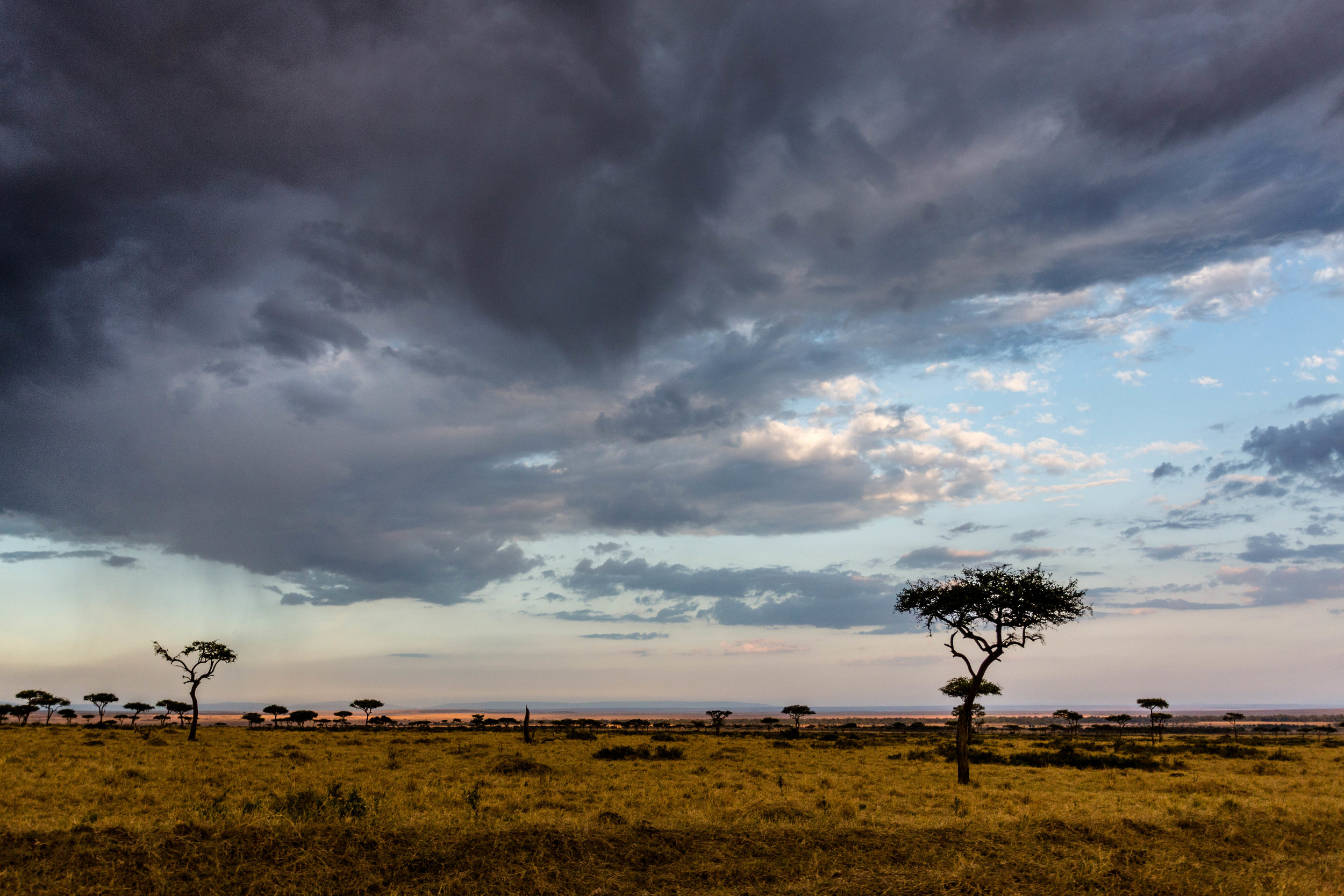 Kenya safari-59.jpg