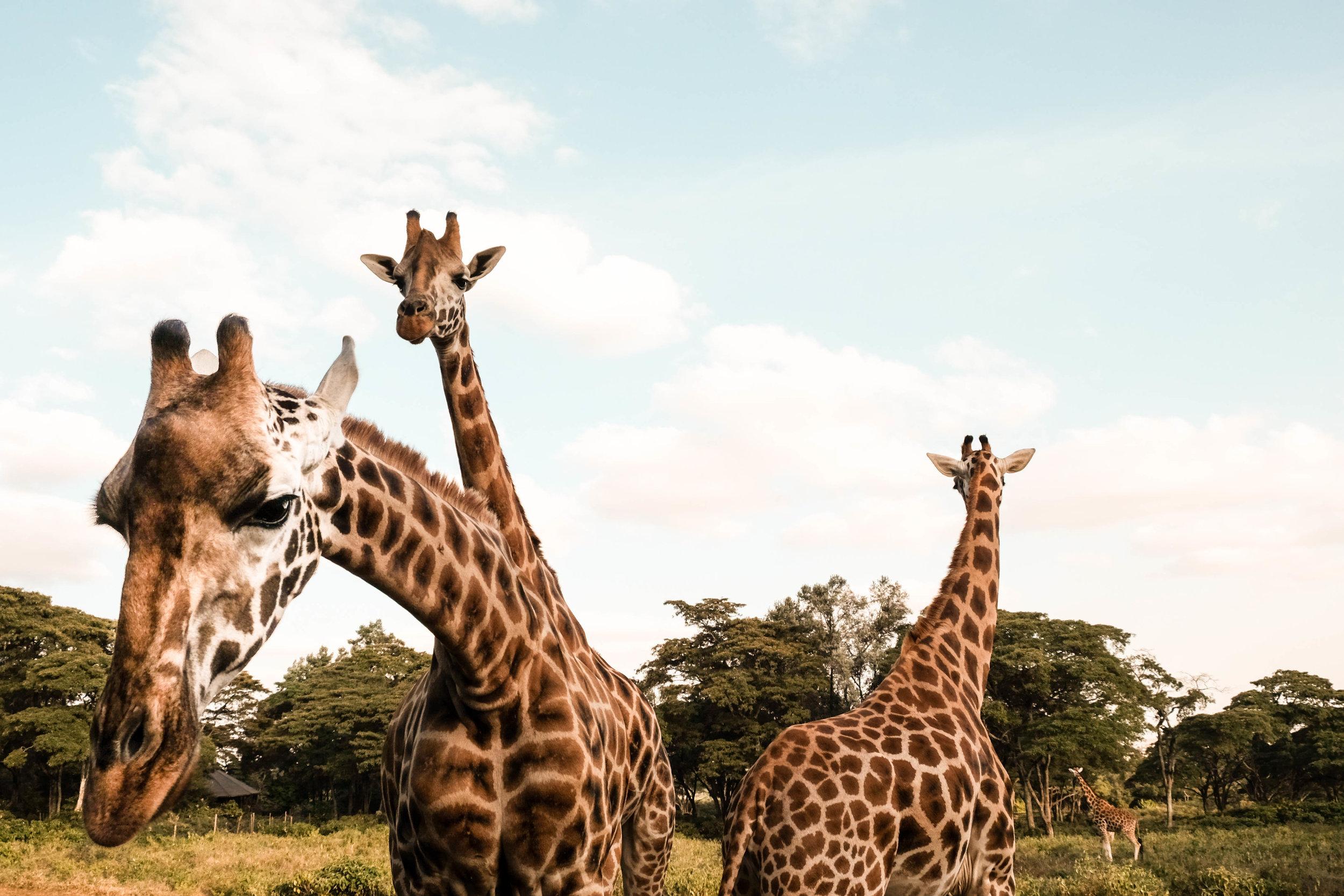 Kenya safari-17.jpg
