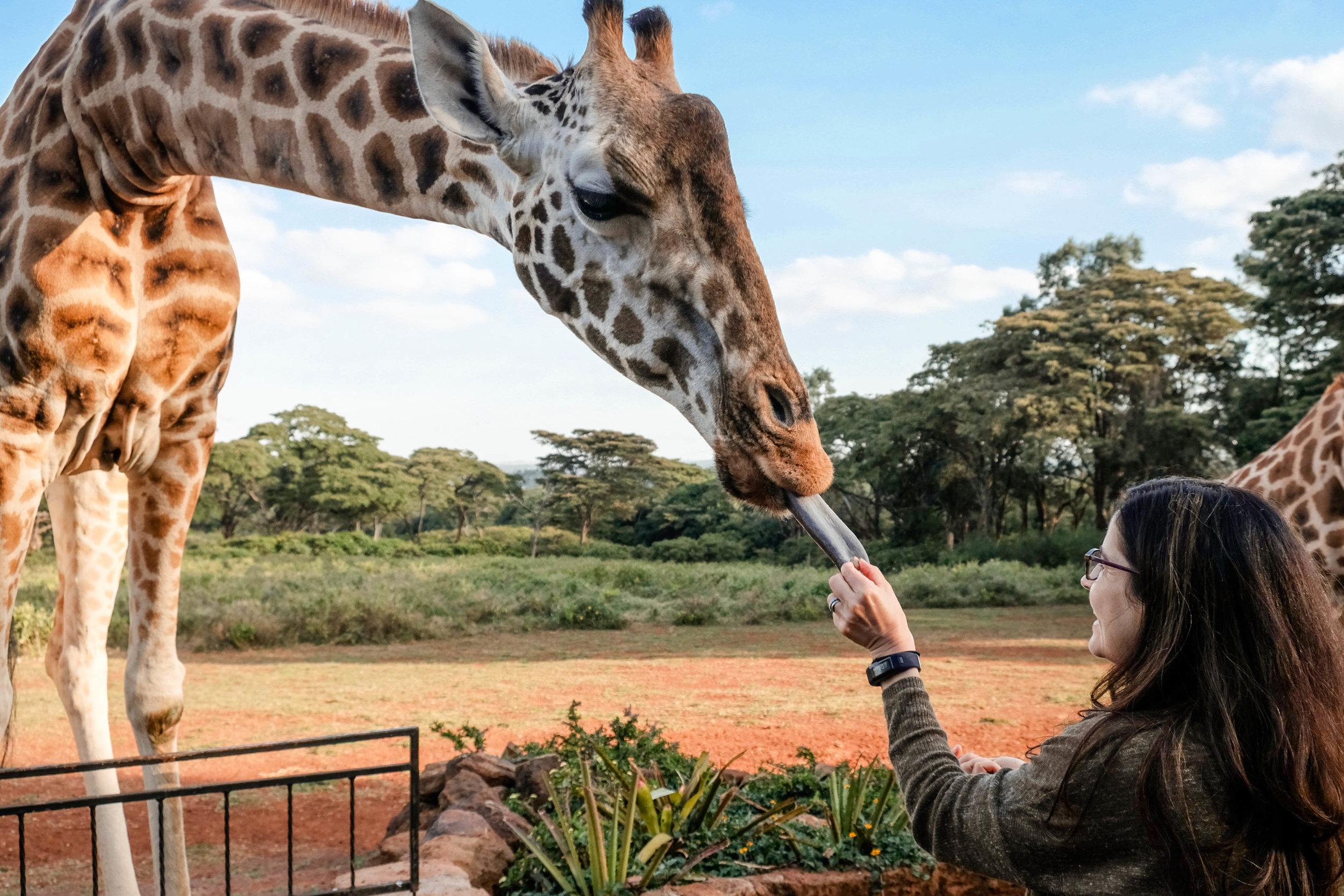 Kenya safari-16.jpg