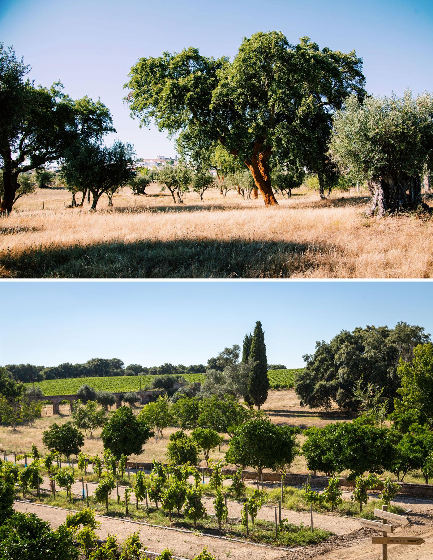03_cork_vineyards_aug19_v2.jpg