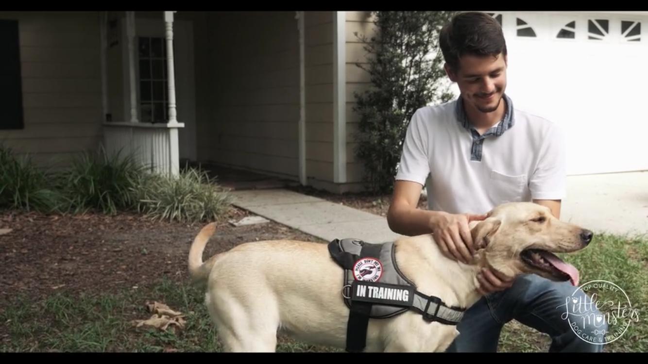 Dog Training Session with White Labrador