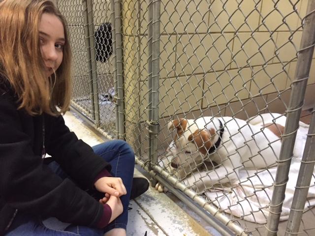 Trip to Animal Shelter