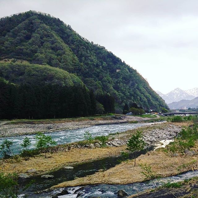 Well, the snow melt was coming down pretty fast and cold but the calm, clear section was an #eveningswim dream. Seems like some of the #volcanic #onsen #water mixes in. Just right. Looking forward to getting to know this valley a little better. #springtime #springswim #wildswimmingjapan #riverswimming #letsgoswimming #jumpin #swimminginjapan #river #explorejapan #niigata #uonogawa #sofreshsoclean