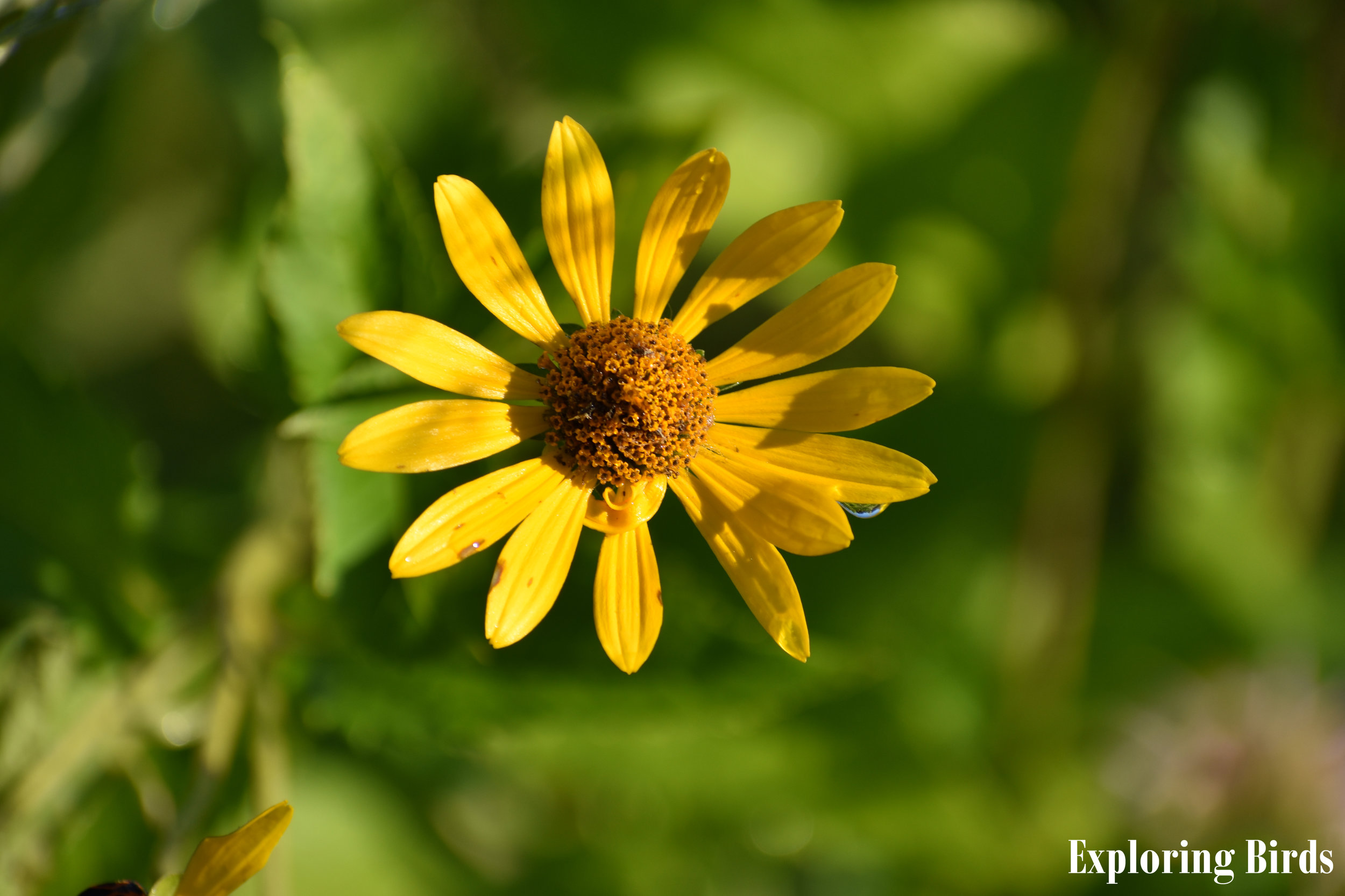Sunflower is a flower that attracts birds