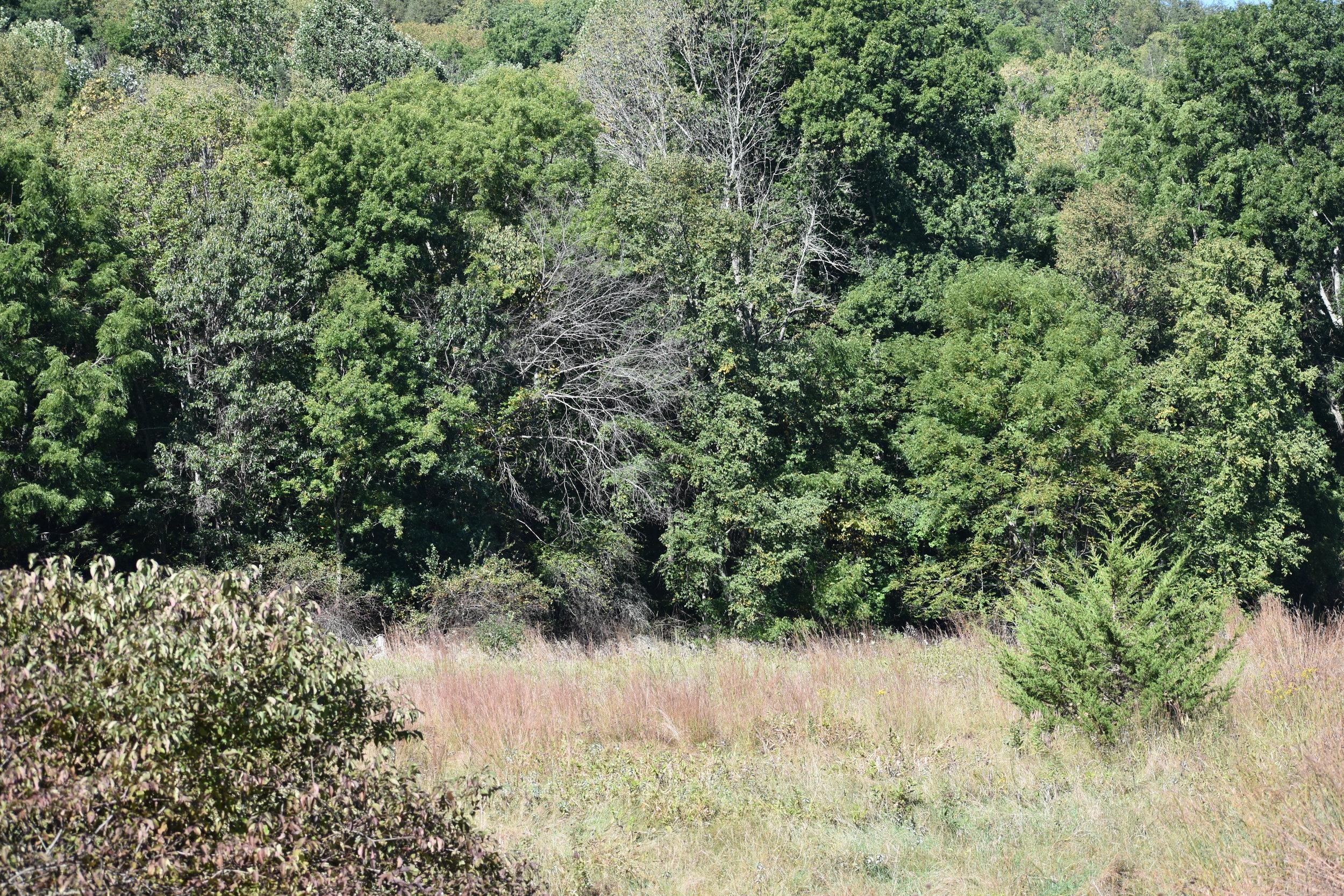 Habitat: Open Weedy Field/Forest Edge