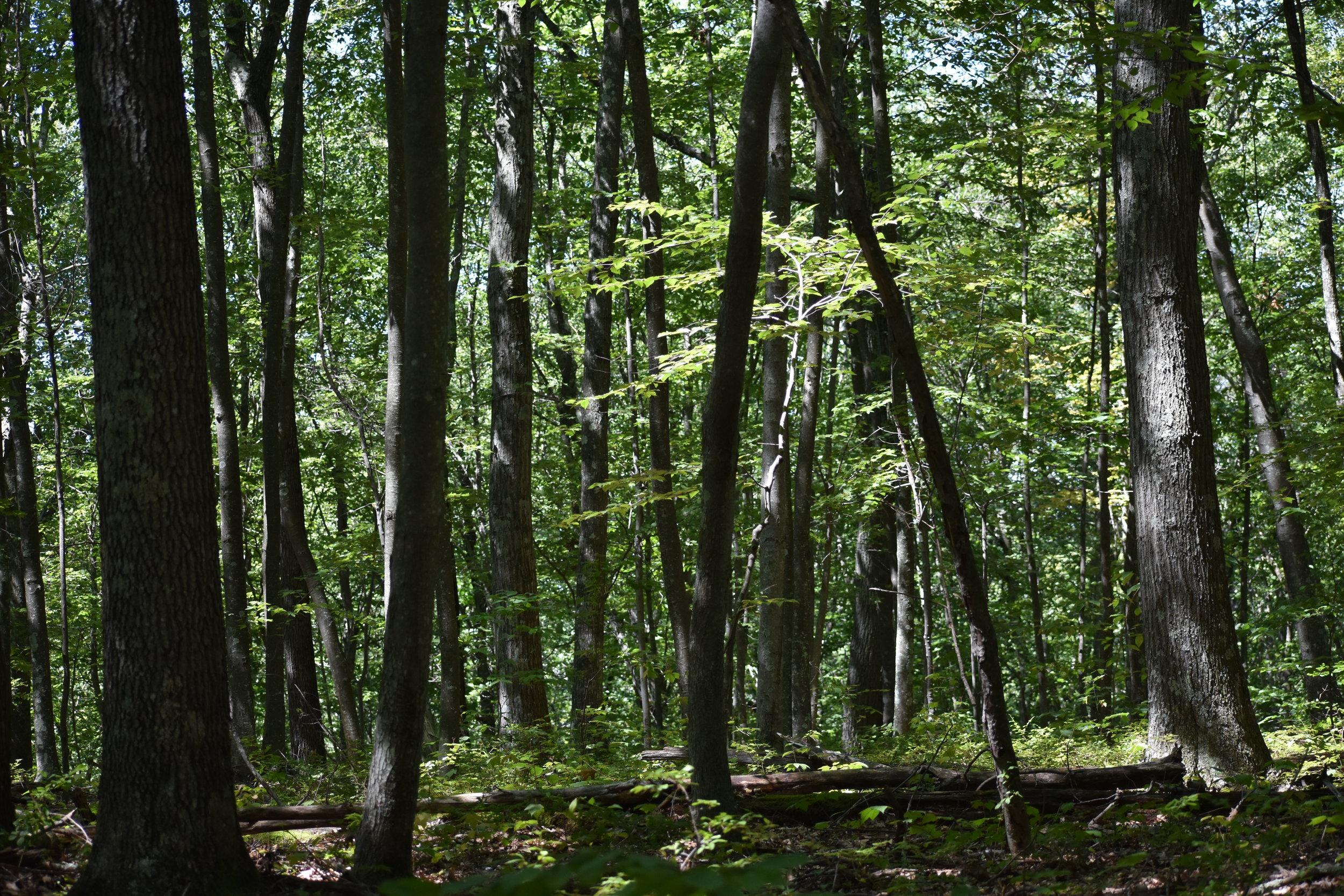 Habitat: Wooded Areas
