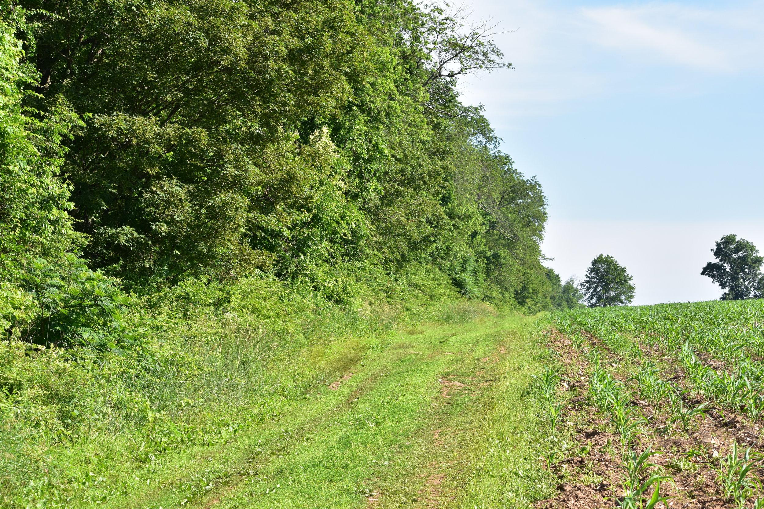 Habitat: Open Woodland Edge with tall deciduous trees