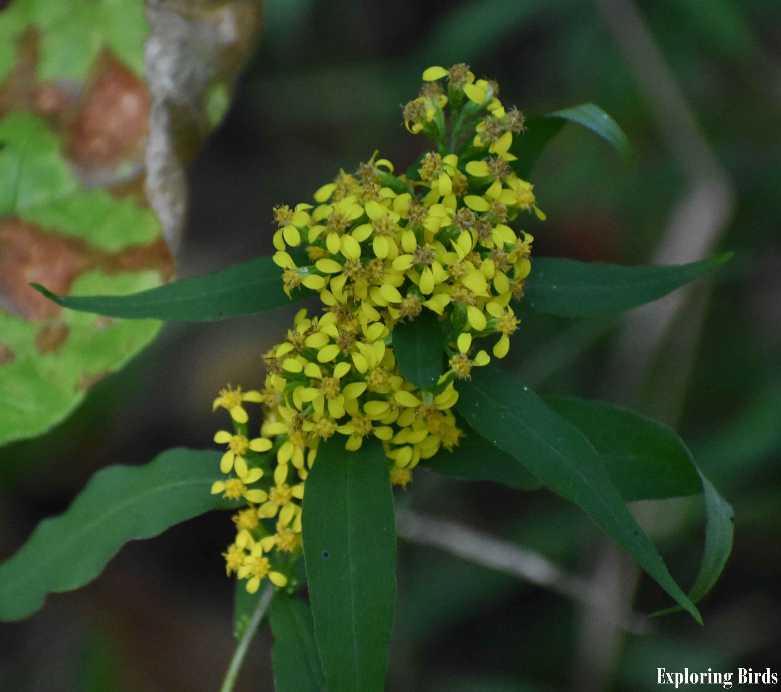 Goldenrod is one of the best best flowers for attracting birds