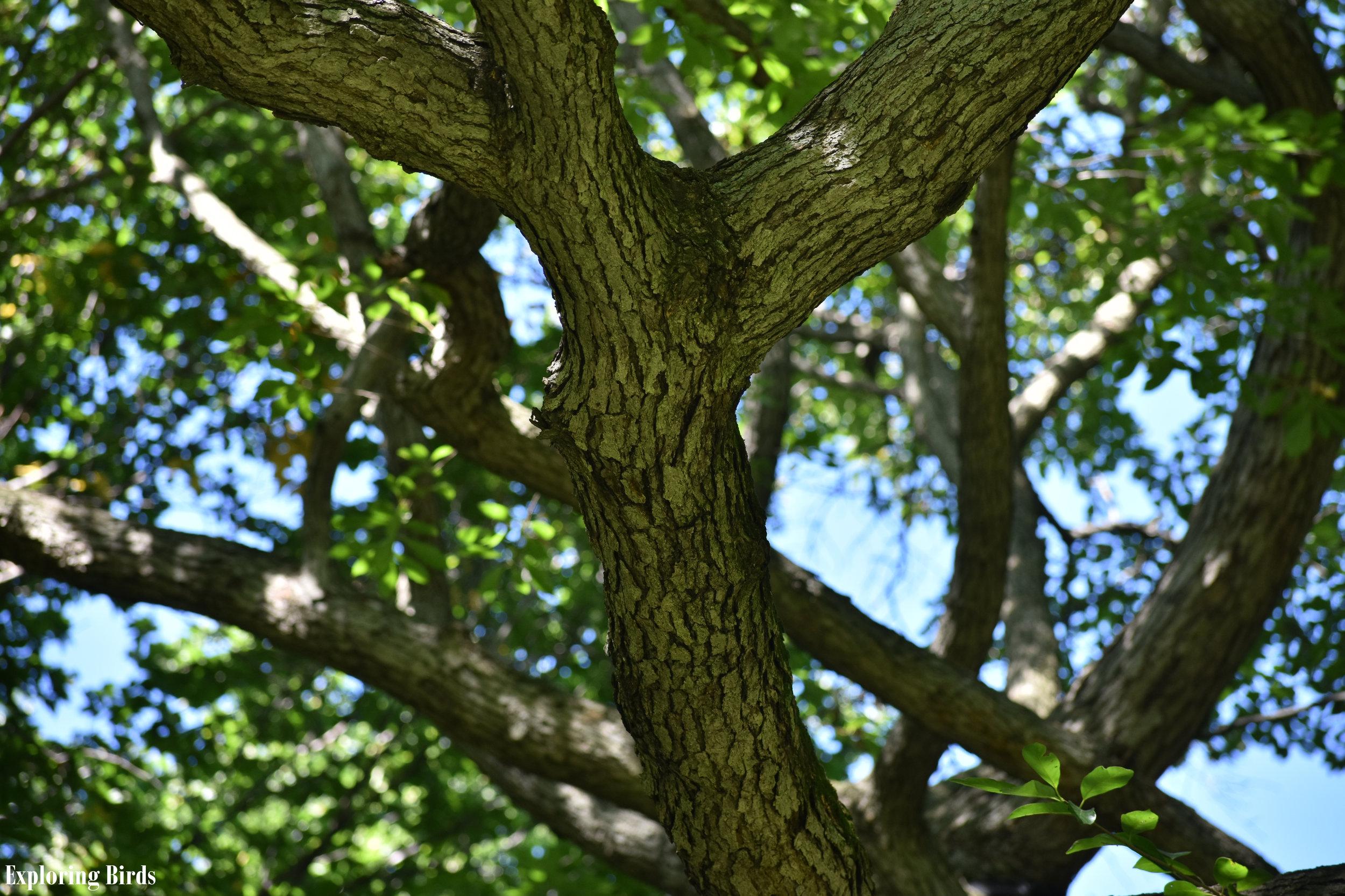Blackgum trees attract many birds