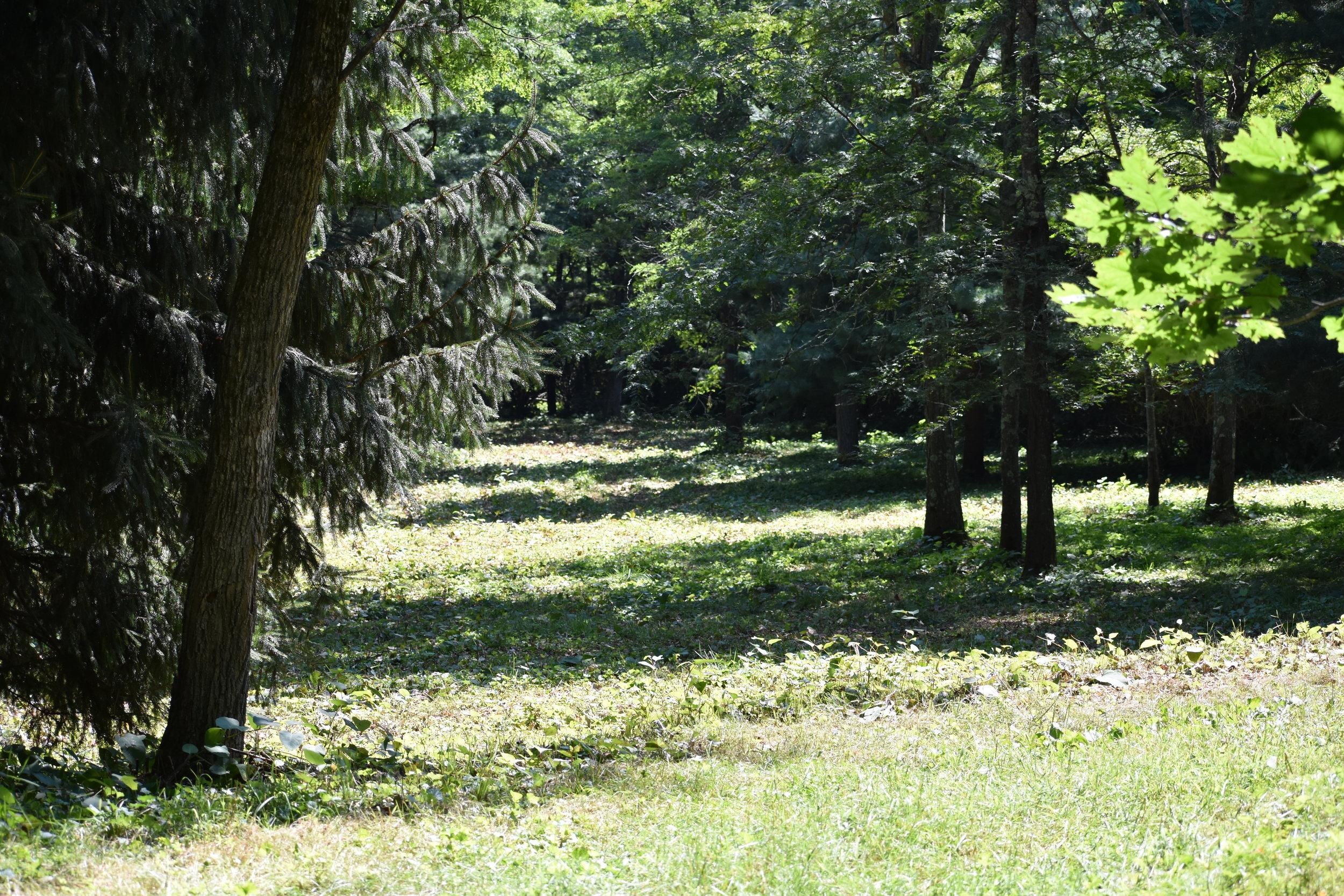 Open Woodland Habitat