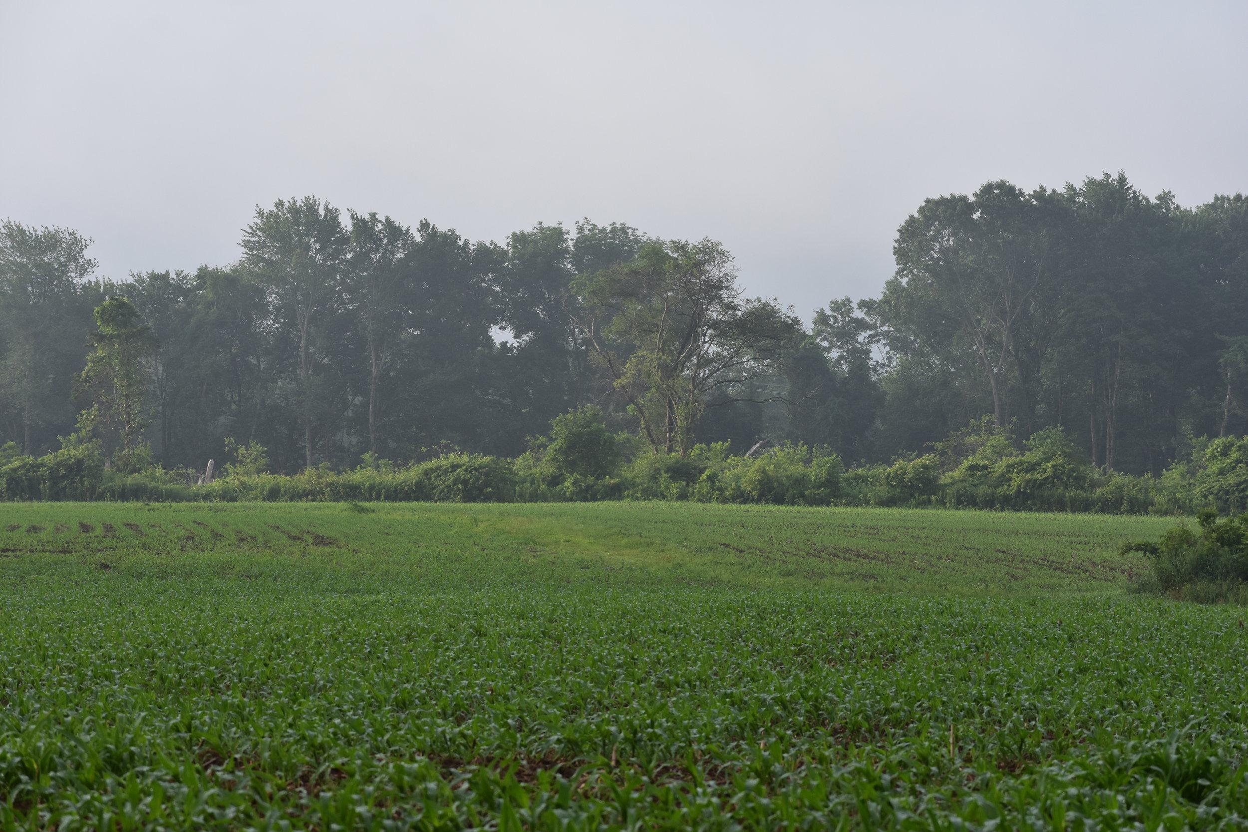Open Field Habitat