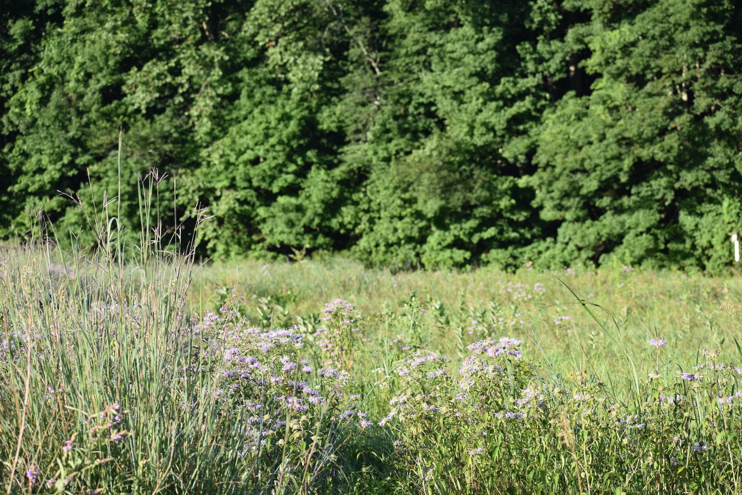 Habitat: Open Woodland/Field