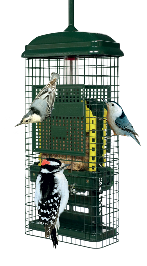 suet.png