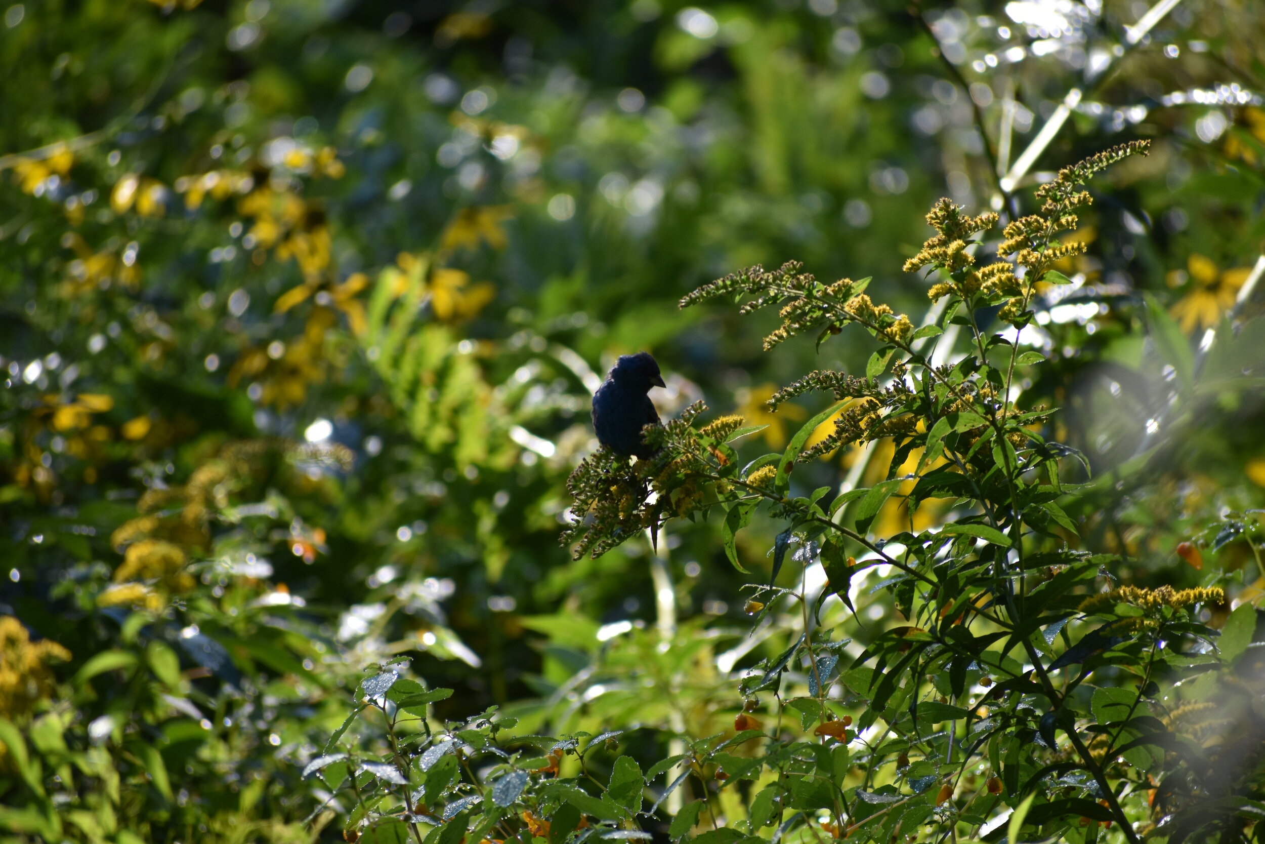 Top 10: Ways to Attract Birds to Your Backyard — Exploring ...