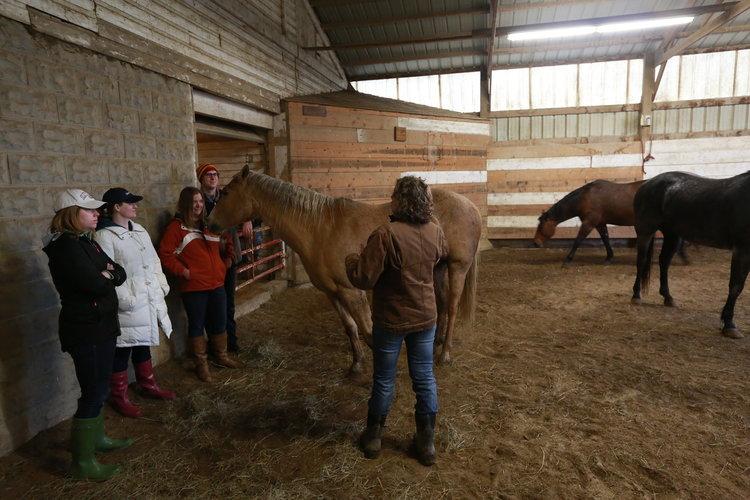 Kim Waltman equine guided education session earlham iowa