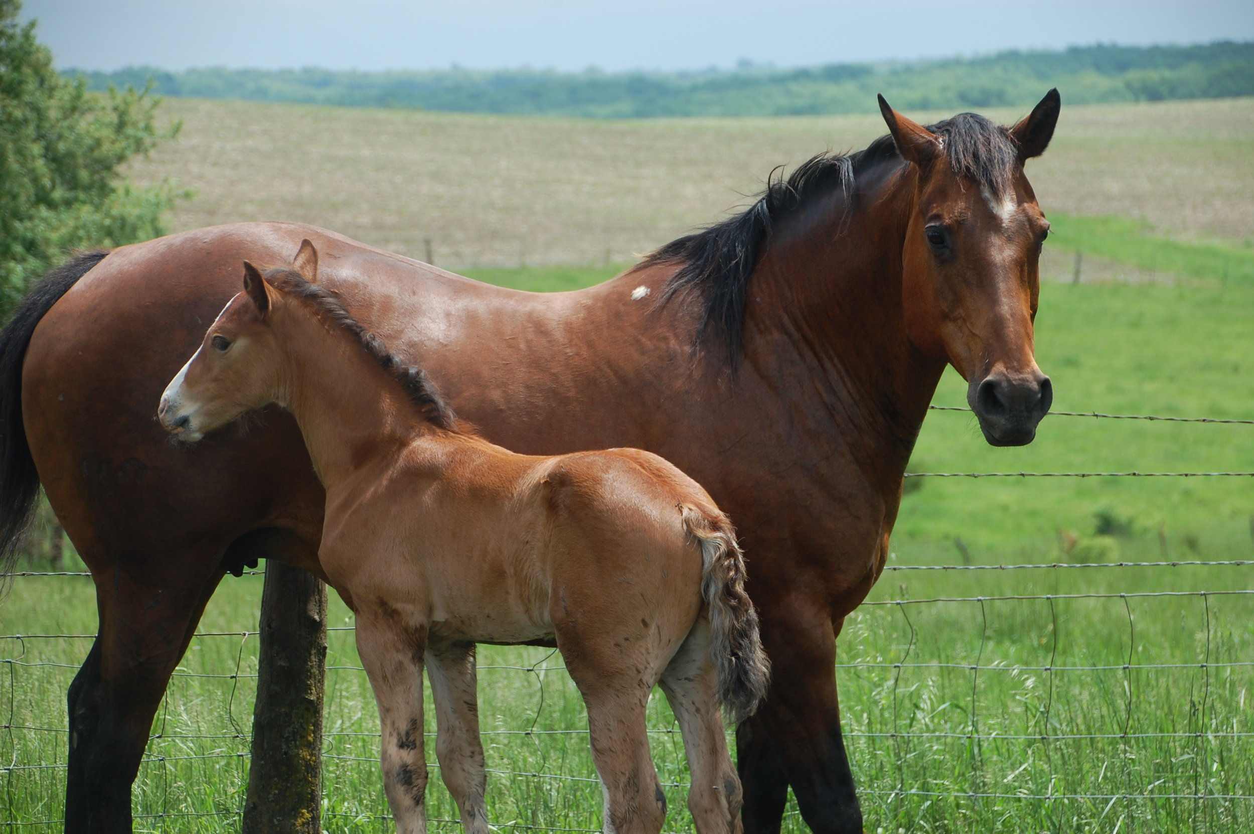 Dolly + her colt