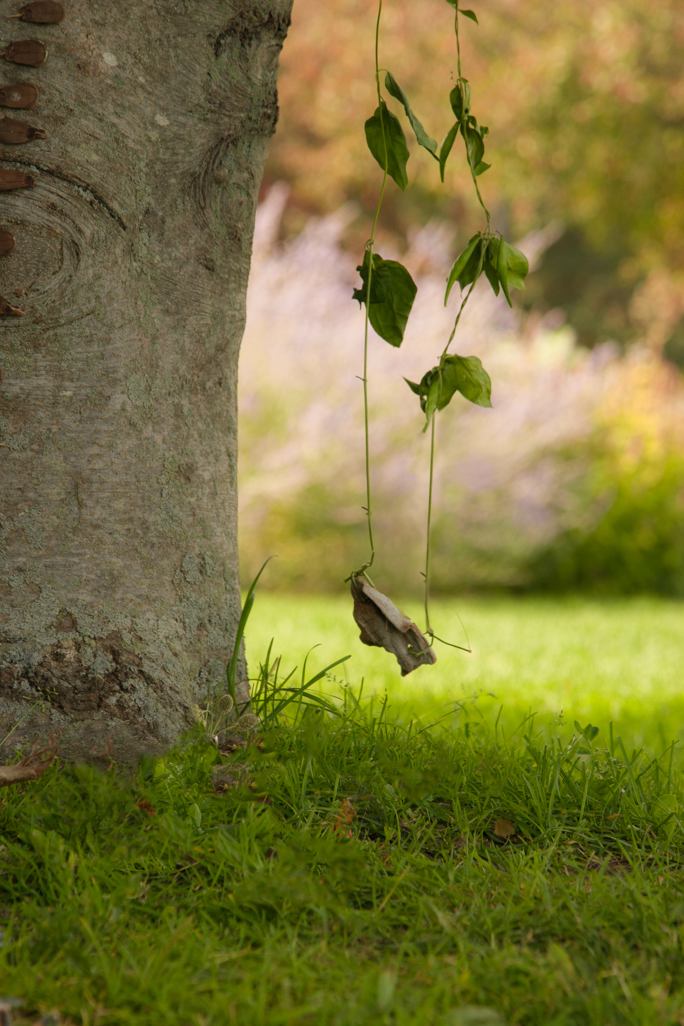 Fairy on a Swing Background
