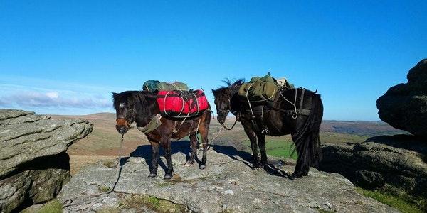 pack ponies.jpg