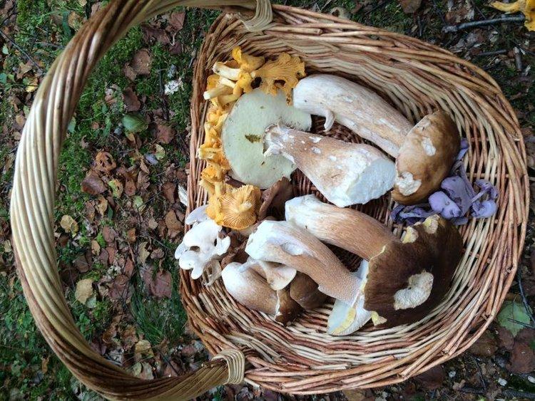 fungal foray.jpg