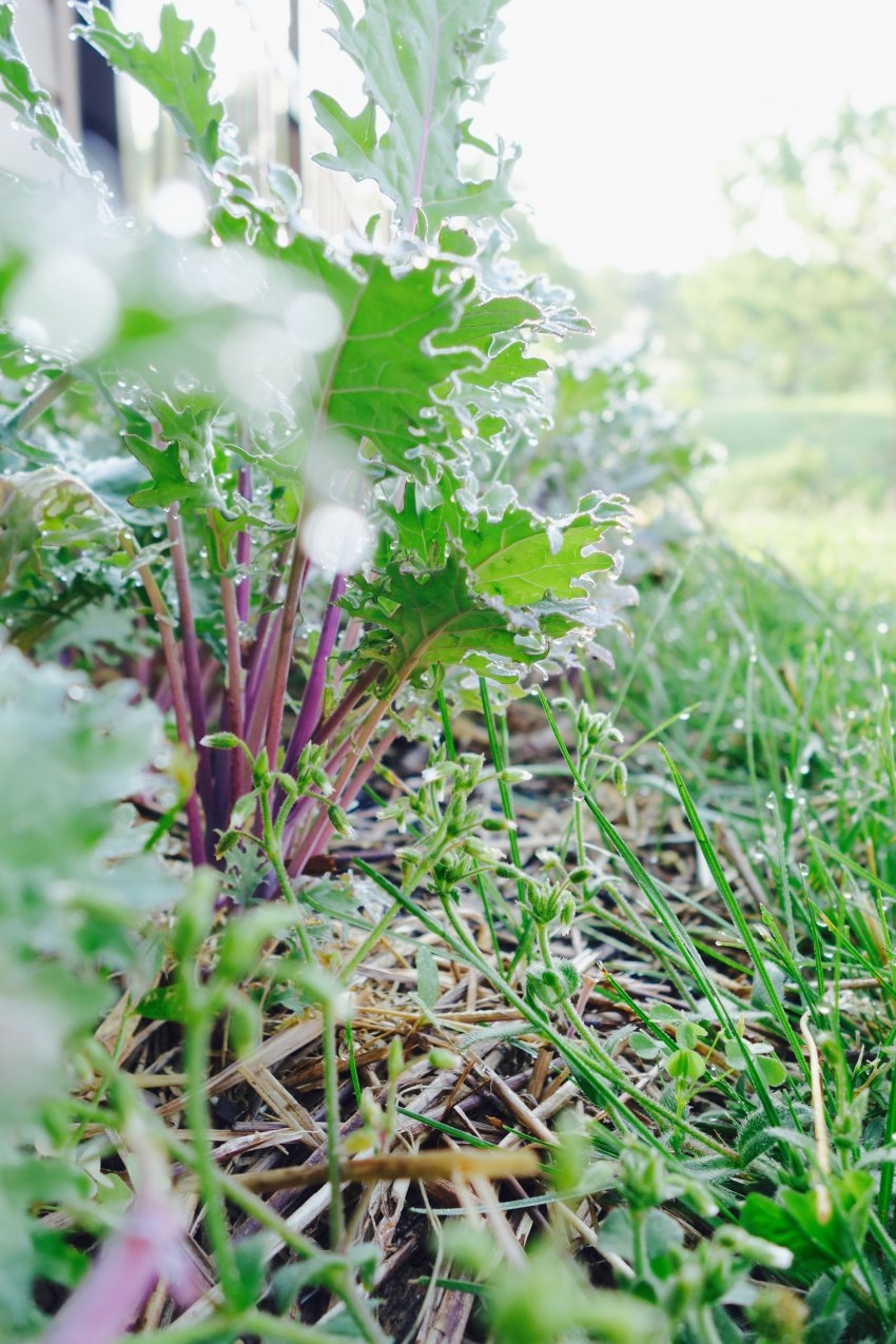 kale-garden-see.listen.be_.jpg
