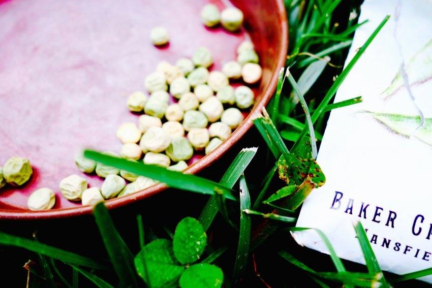 pea-seeds-see.listen.be-.jpg
