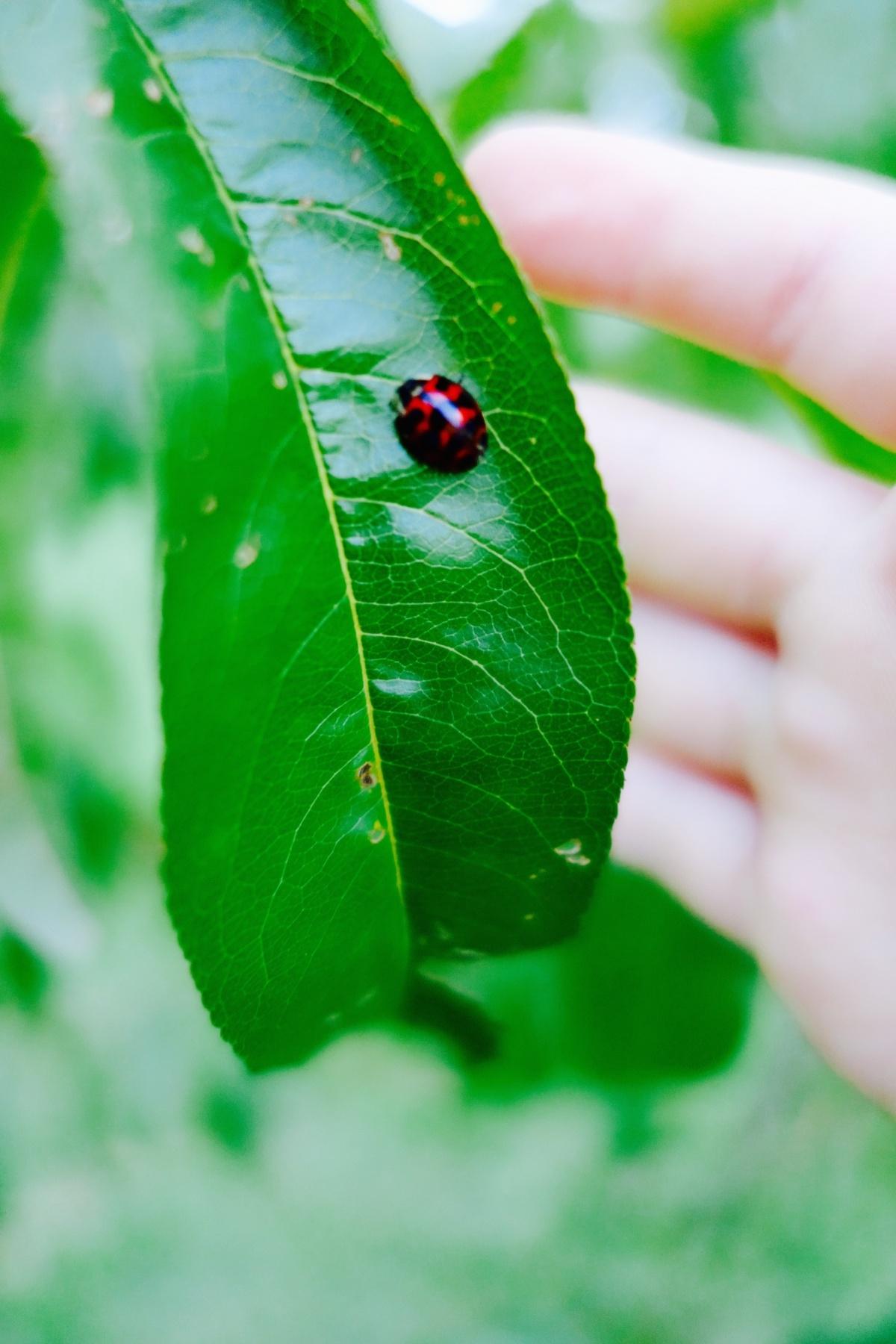 ladybug_.jpg