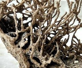 termite wood.jpg