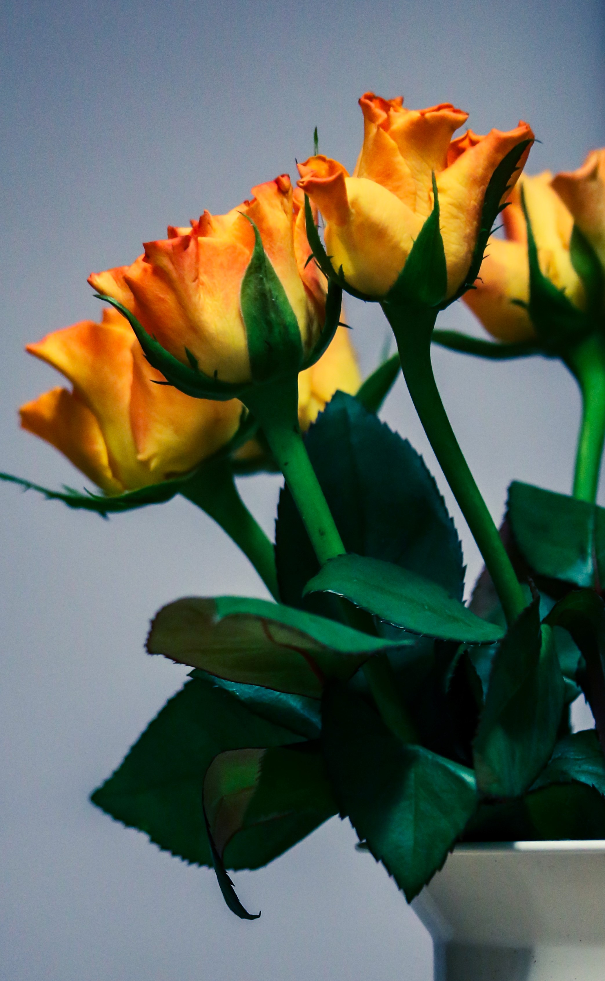 yellow roses in vase  (3).jpg