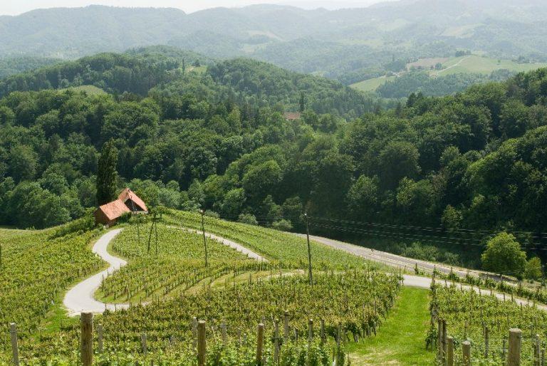 Vinska_cesta_Wine_road_Slovenia_Slovenija_Maribor_Pohorje_Bogdan_Zelnik-1-768x514.jpg