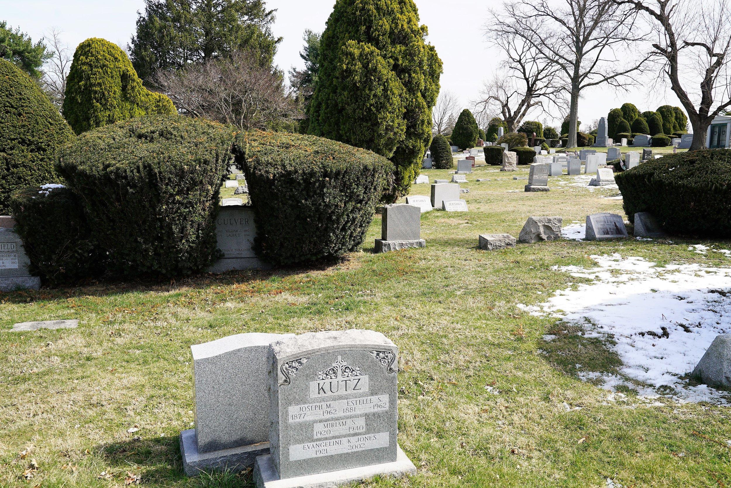 Arlington Cemetery, Drexel Hill, Pennsylvania: Mature, well-maintained shrubs are everywhere.