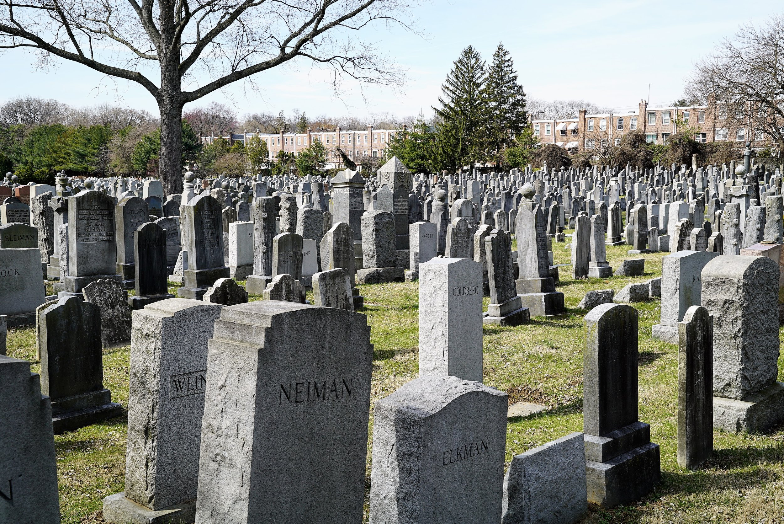 Just one part of a sea of monuments. Har Jehuda Cemetery. Upper Darby, PA.