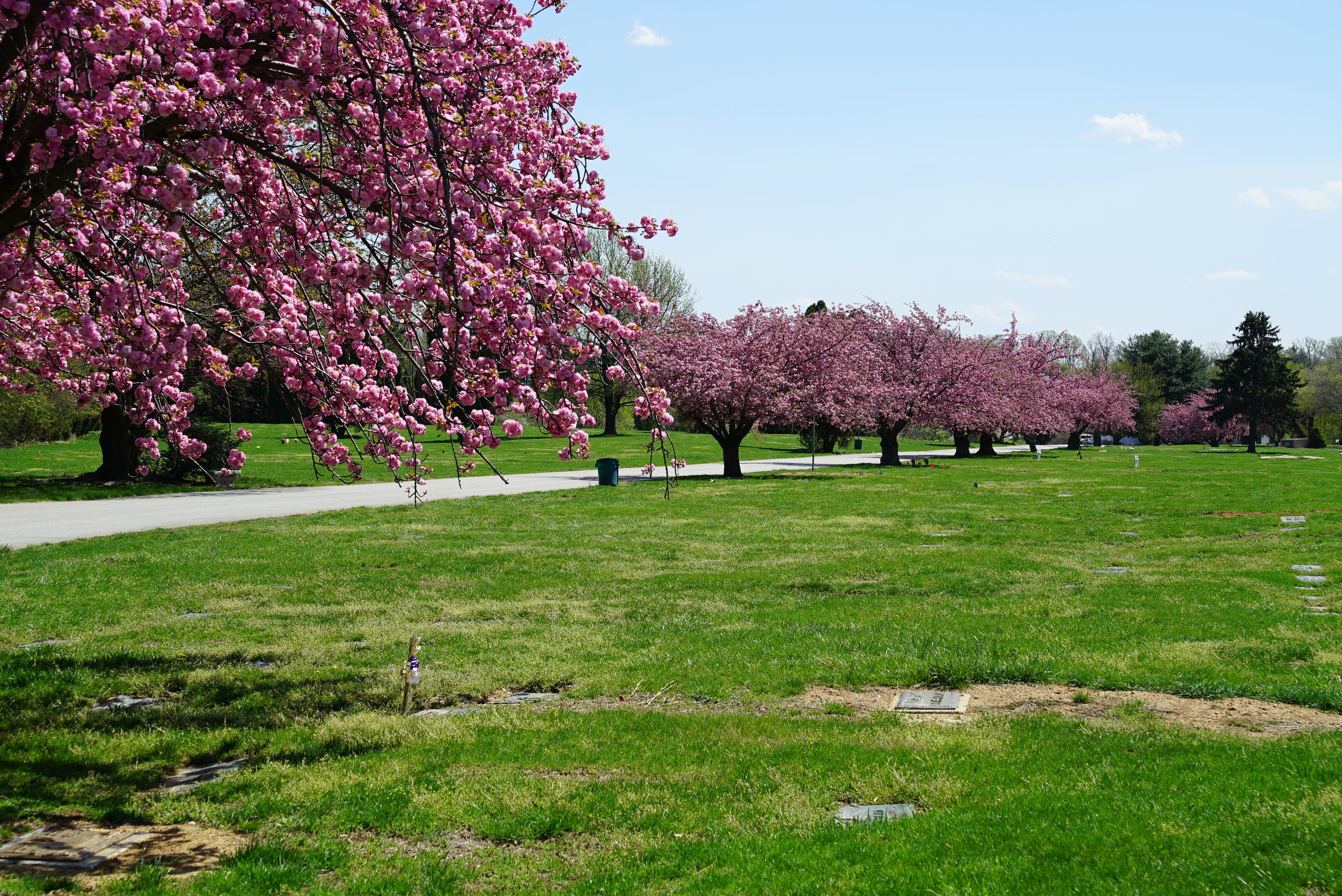 The view immediaitely inside Rolling Green Memorial Park Cemetery, April 2017. West Chester, PA.