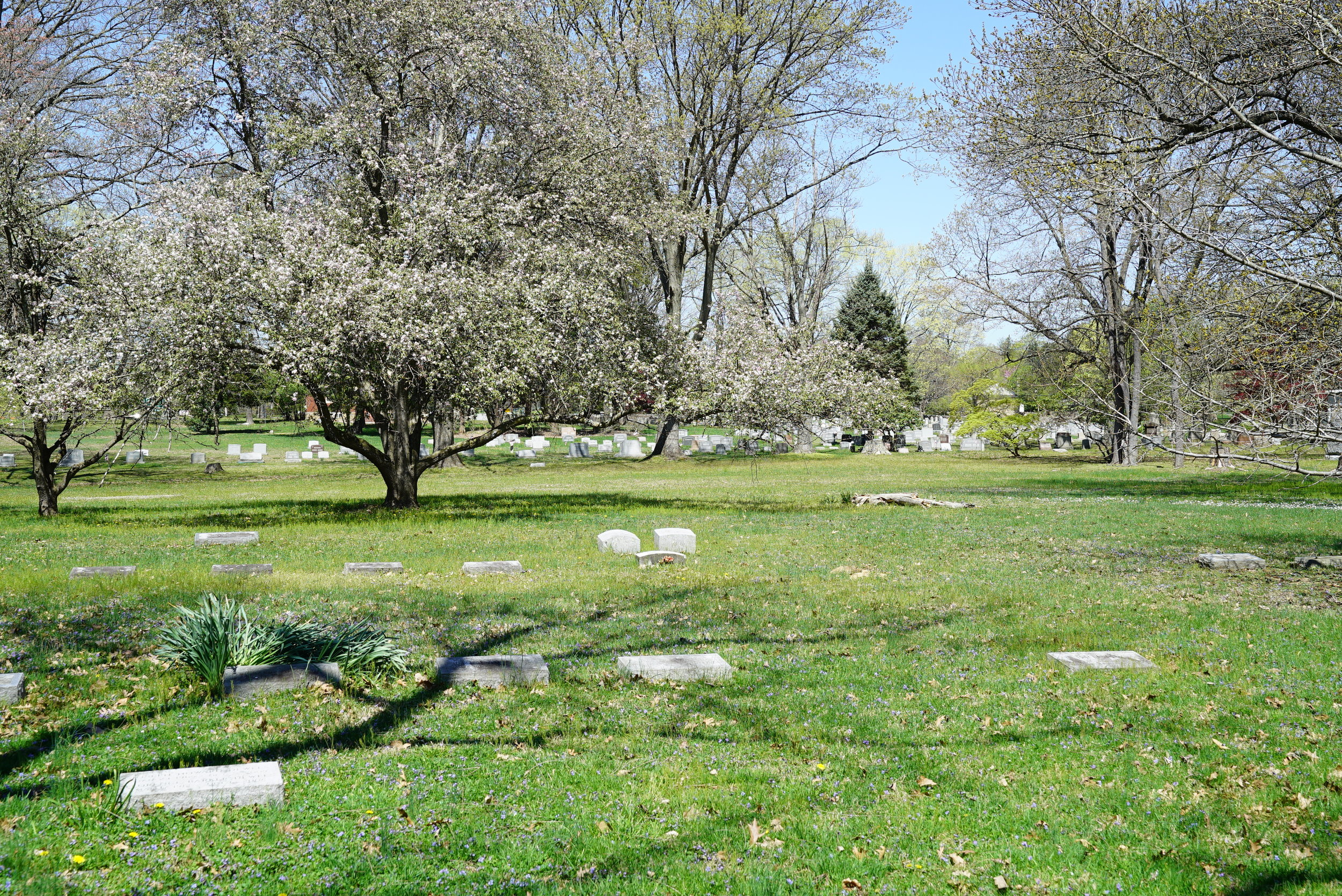 On the grounds of Middletown Friends Meeting Cemetery, looking towards its neighbor, Cumberland Cemetery.