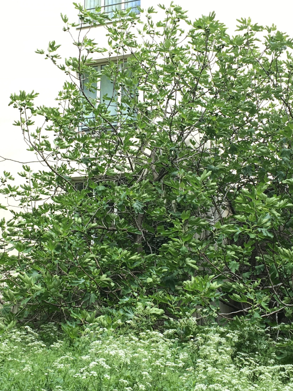 fondation cartier paris talin spring spring finn and co peaceful place in paris fig tree in paris