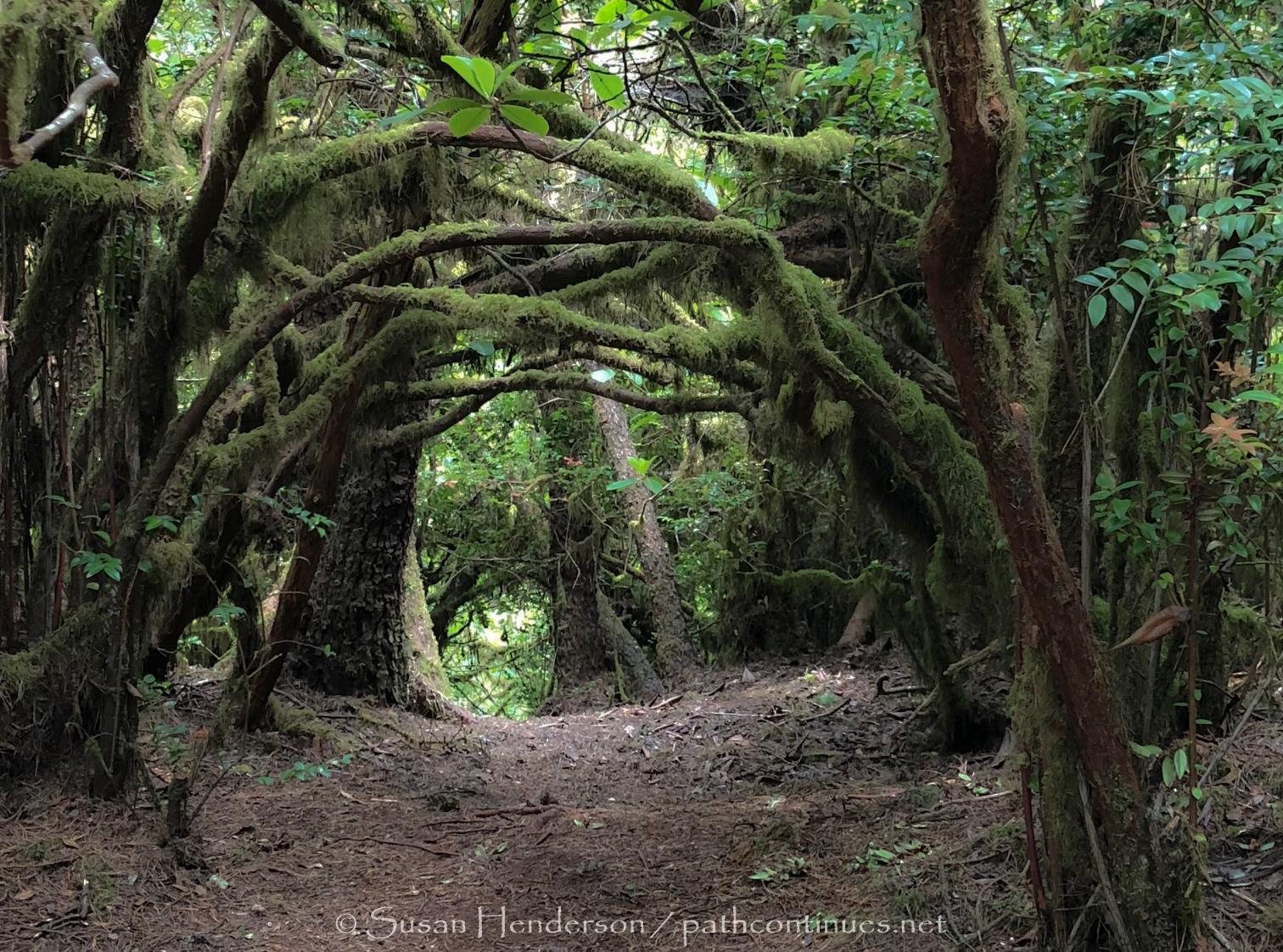 hobbit trail.jpg