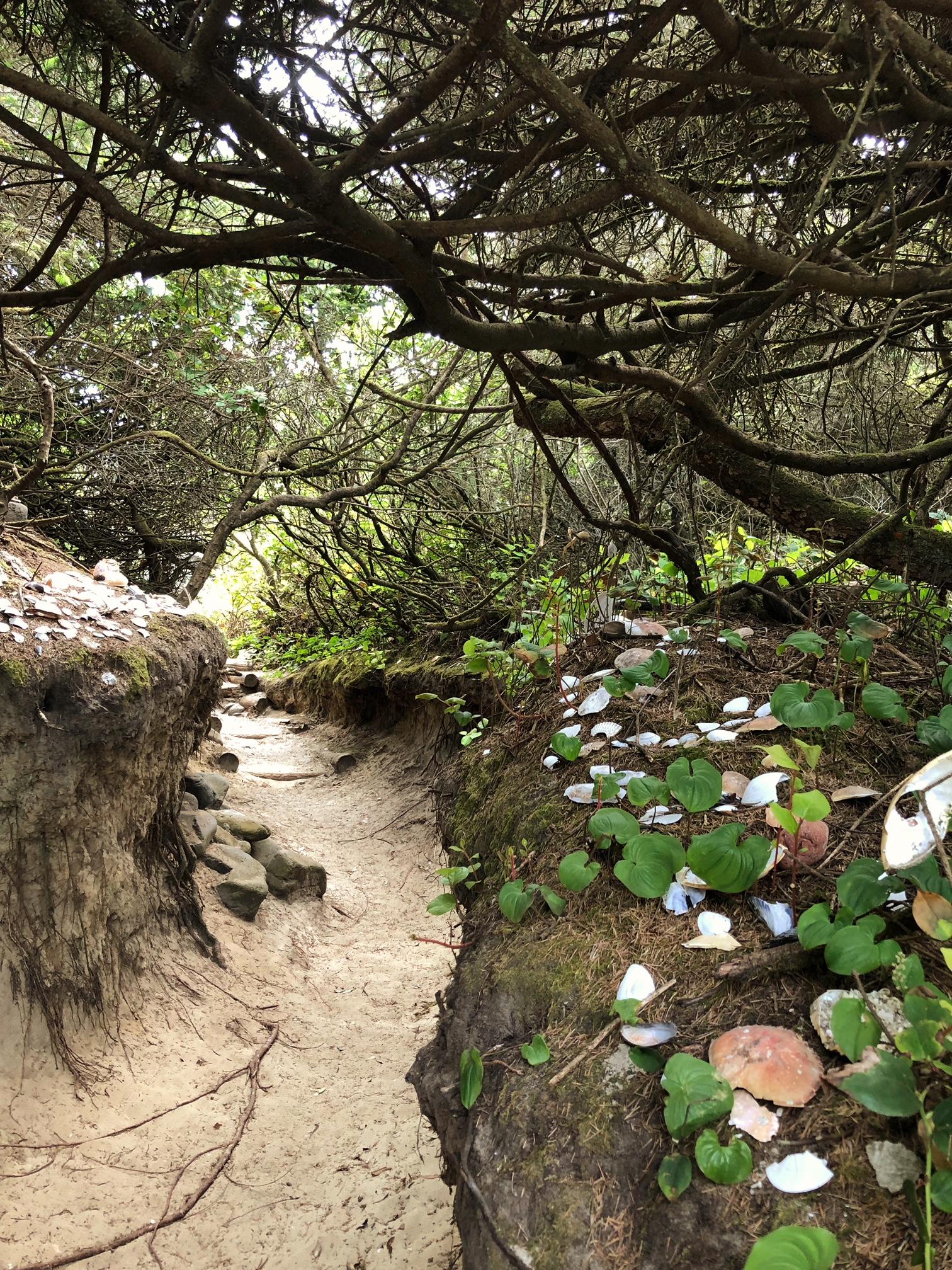 hobbit trail 2.jpg