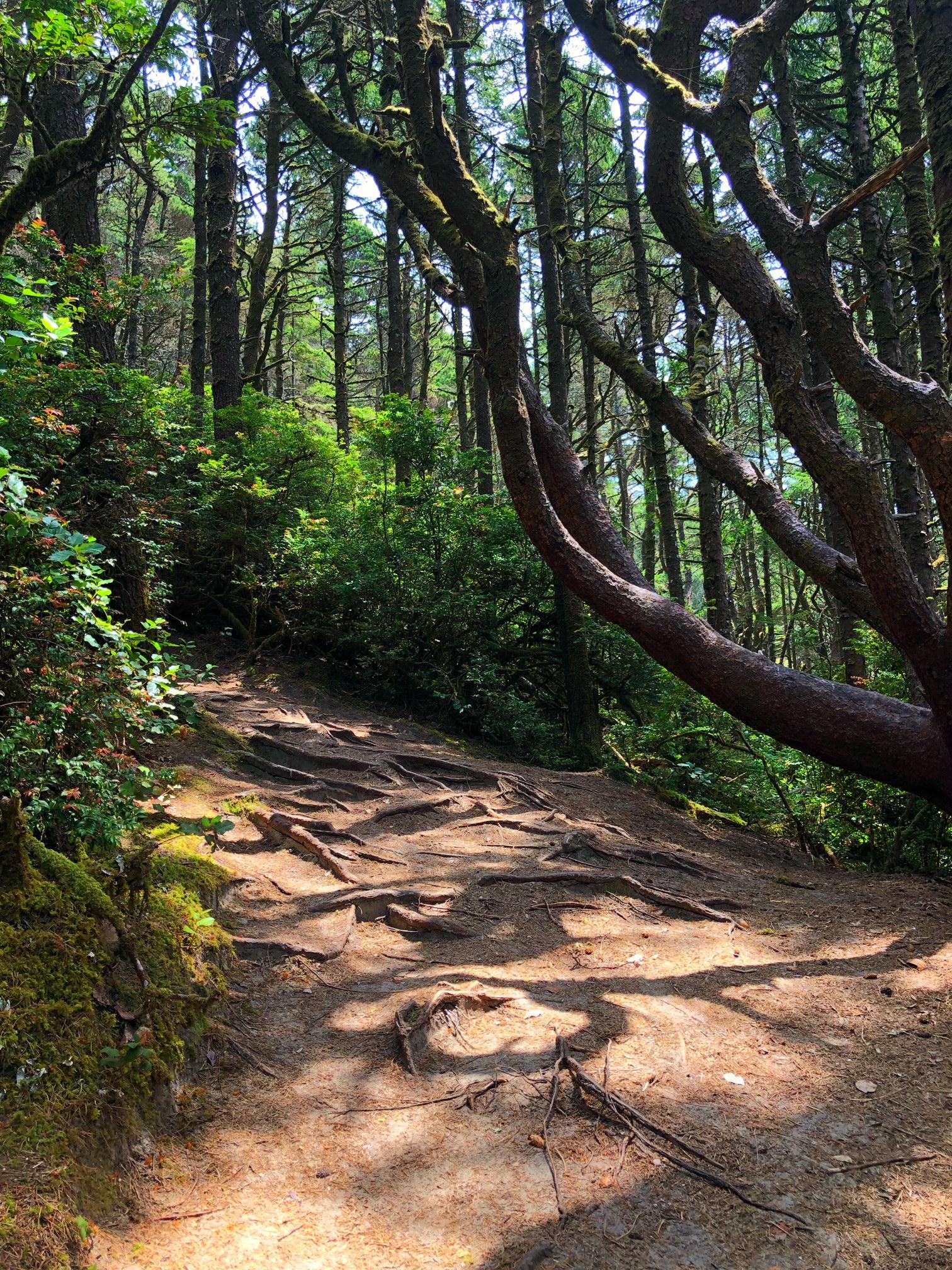 hobbit trail 3.jpg