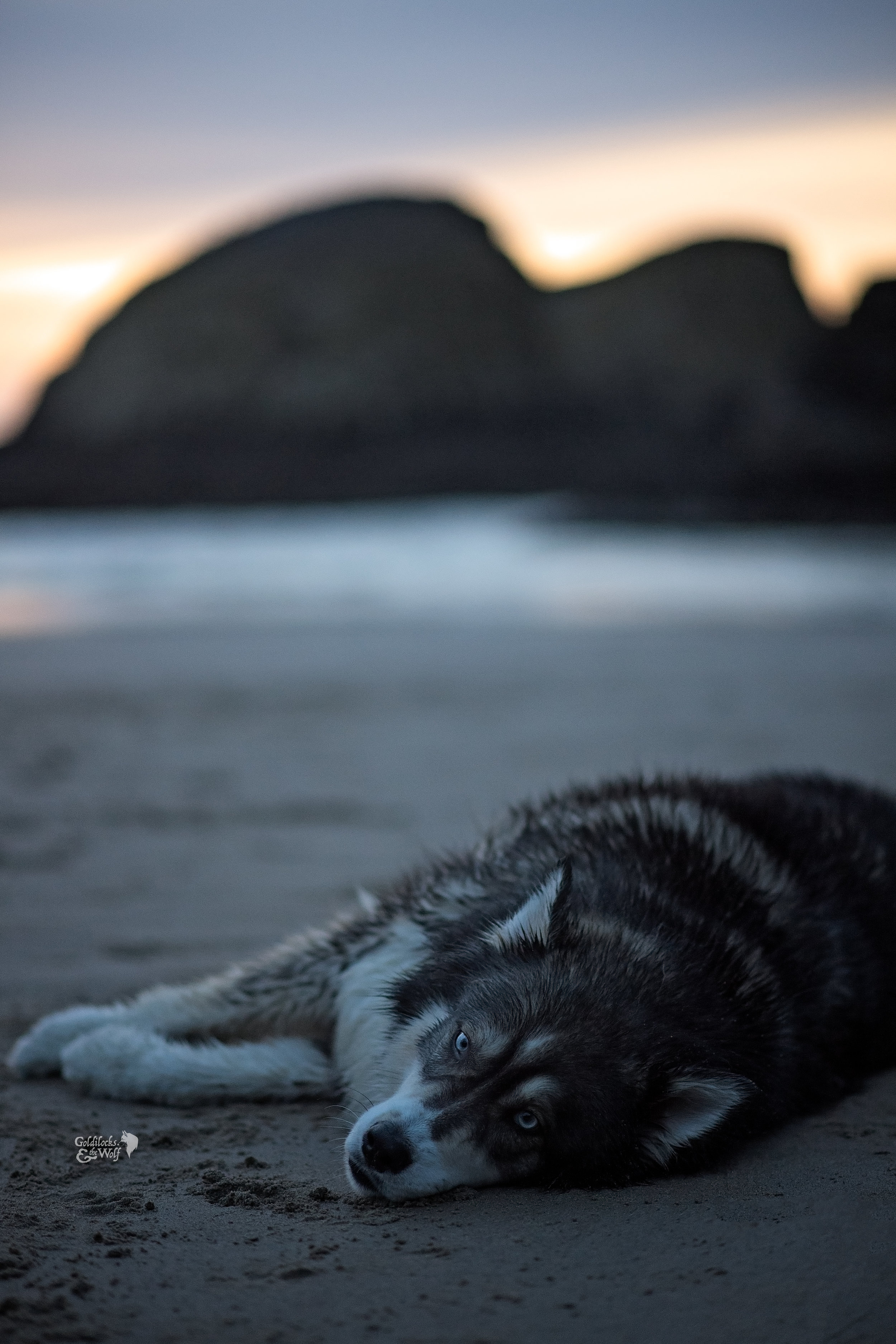 Kyro resting on the beach after a long day of play