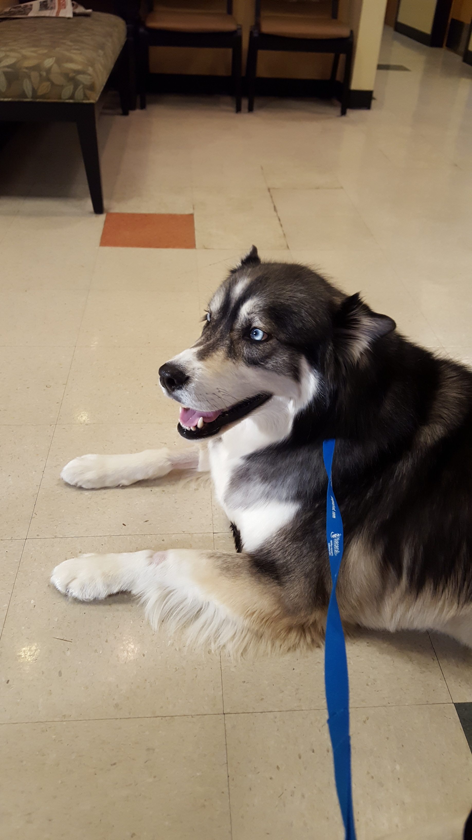 Waiting at the Vet to get checked out