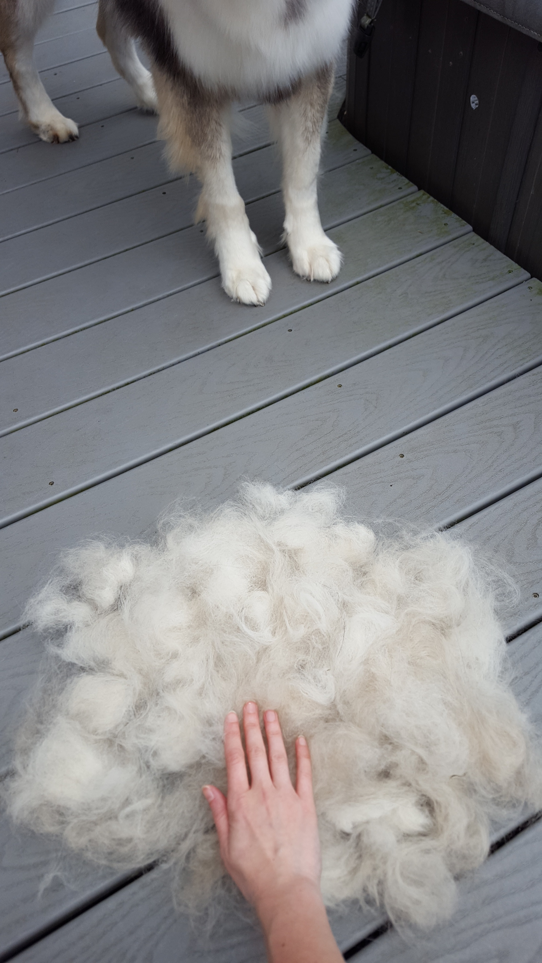 Hair shed after just 15 minutes of brushing