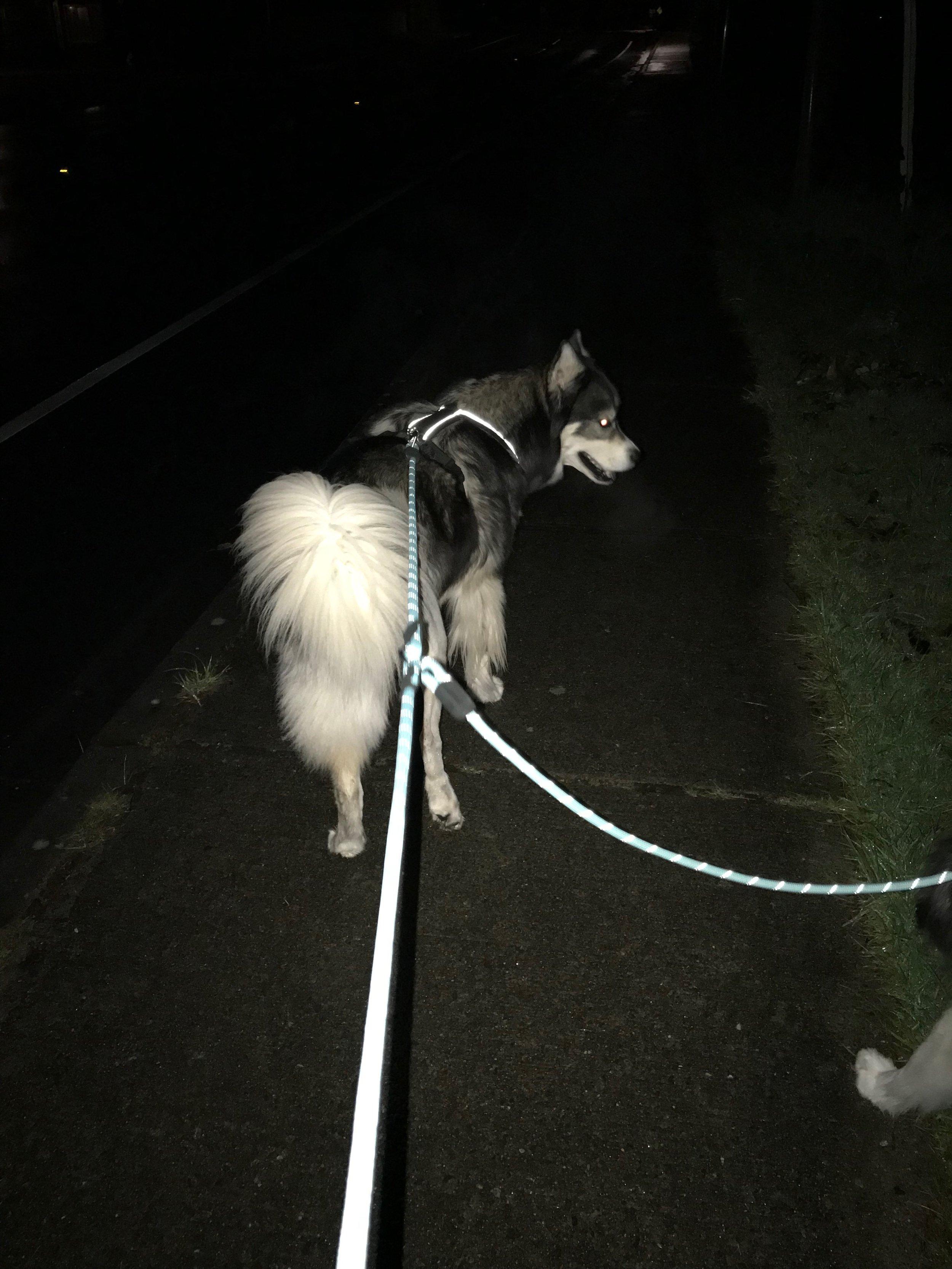 Nighttime walk