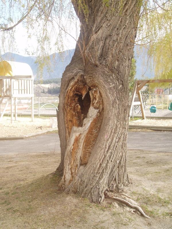 tree-risk-assessment.jp