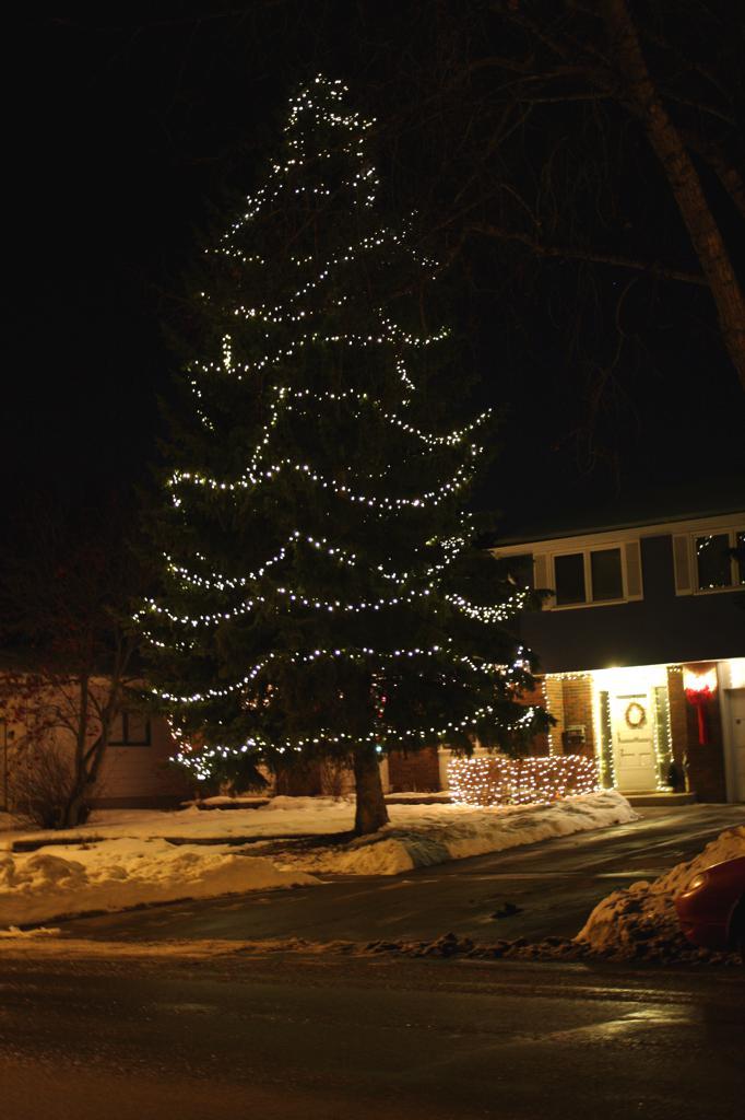 spruce_lights.jpeg