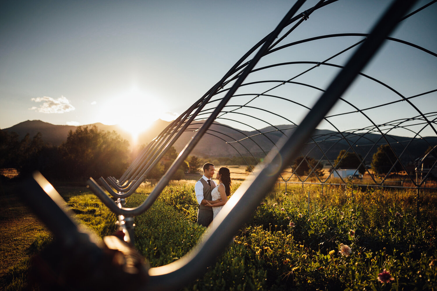 Golden hour with the view of the mountains from Pastures of Plenty's flower fields.
